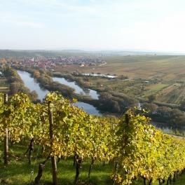 Nordheim vor den Ausläufern der Weinberge