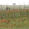 025a-pict0106-maria-im-weingarten